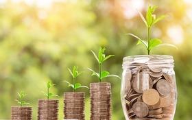 Do čoho sa oplatí manažérom investovať v roku 2019?