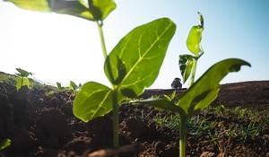 Pôdu už kúpite bez obmedzení. Využite to
